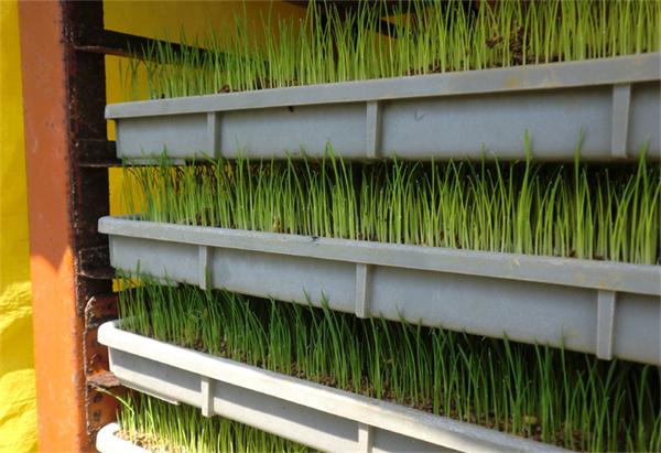 绿色环保的育芽箱你值得拥有