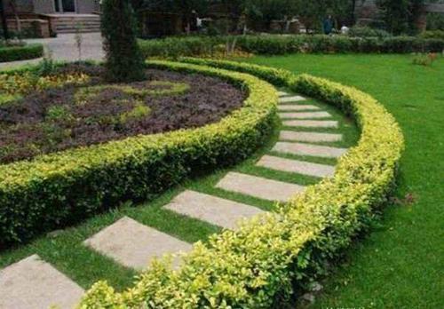 园林绿化中应注意的一些小细节你应该知道