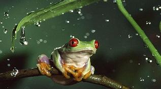 青蛙尾巴再生的新型细胞找到