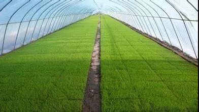 西安工业盐在农牧业中的重要作用