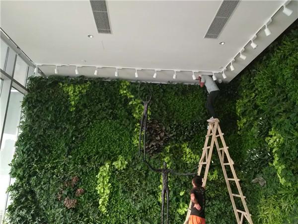 永生苔藓墙