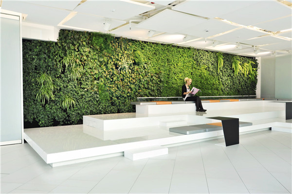 陕西室内植物墙