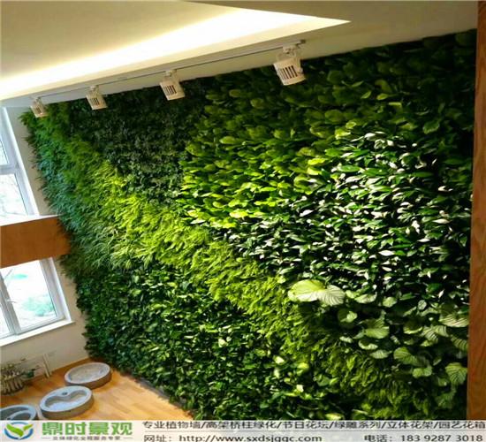 西安绿植墙常见问题