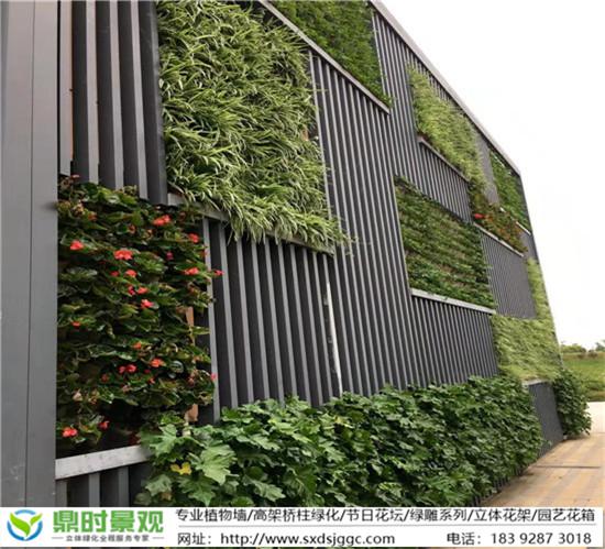 室内外垂直绿化植物的选择以及应具备哪些条件