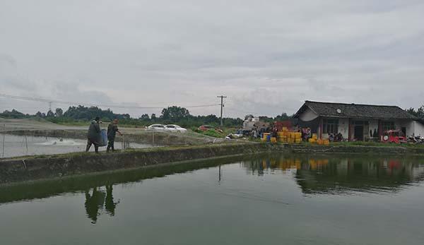 正规彩票刷流水兼职 泥鳅养殖技术案例