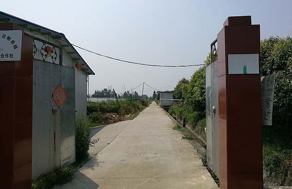 崇州市鸭脖娱乐app黄 泥鳅养殖基地展示