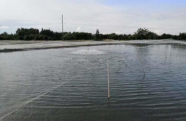 泥鳅养殖技术基地展示