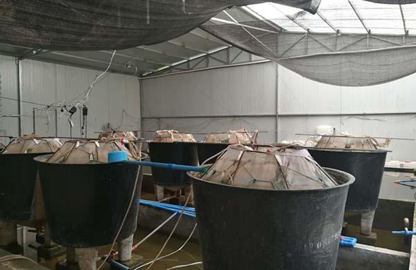 NBA必发投注量 泥鳅养殖技术展示