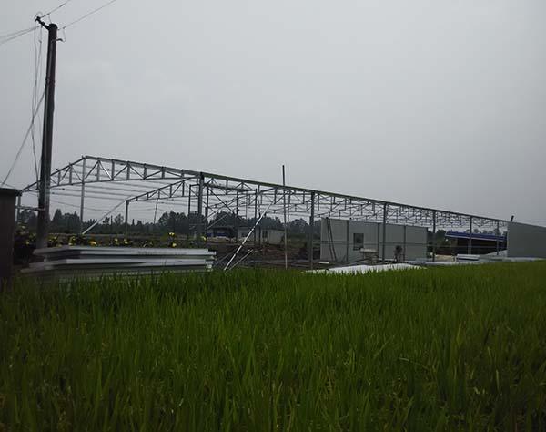 四川泥鳅养殖技术