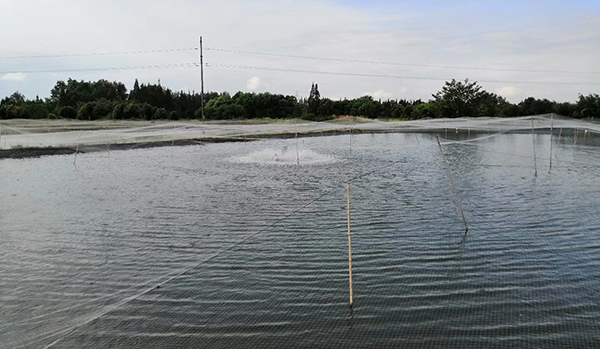 崇州市正规彩票刷流水兼职 泥鳅养殖农民专业合作社