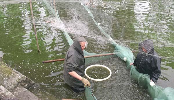 泥鳅孵化培训
