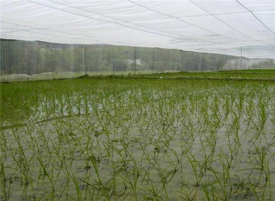 农业种植60目防虫网