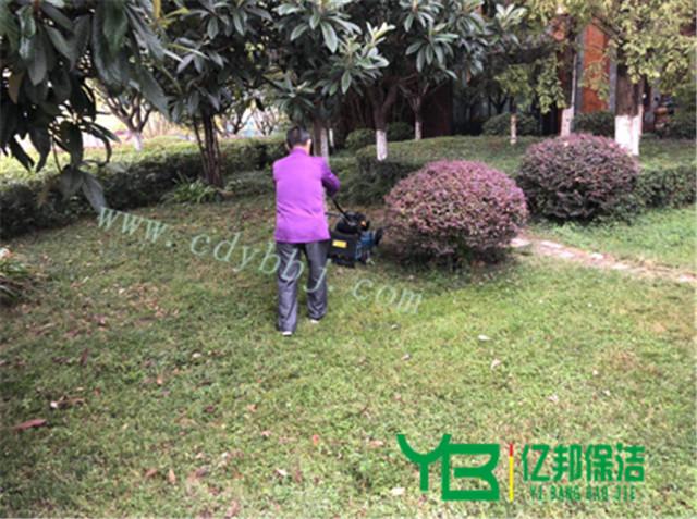 绿化管理与养护服务