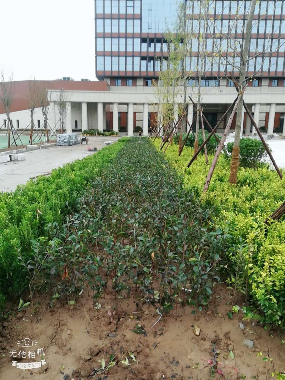 技术研究所-陕西园林景观设计