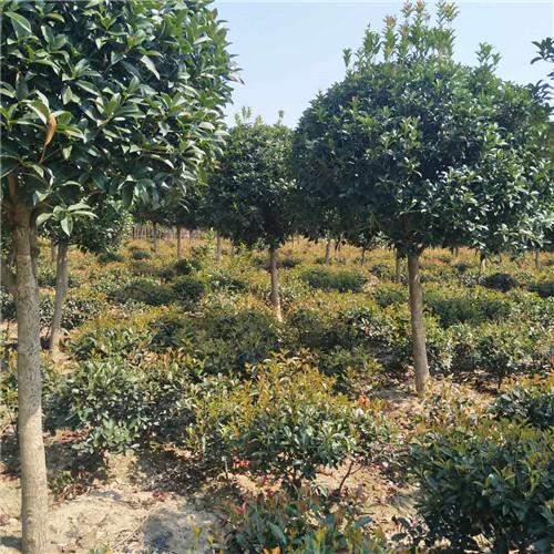 陕西园林景观设计客户见证:质量决定认可度