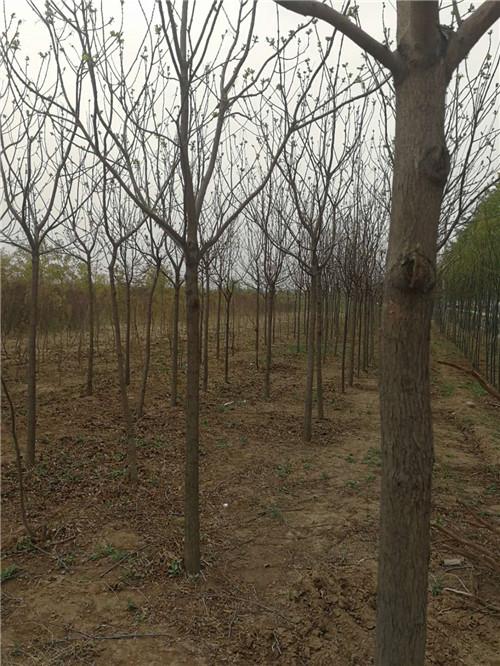 陝西園林景觀設計哪家好