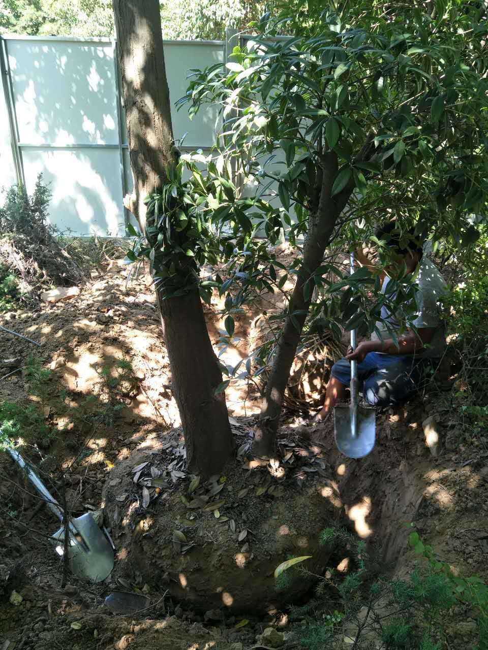 陕西园林绿化工程优惠