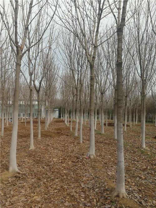 陕西园林景观设计哪家好
