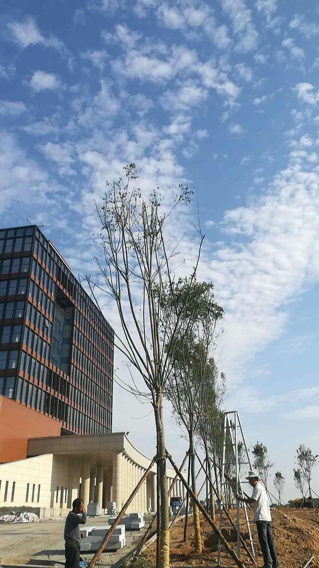 研究所项目-陕西园林景观设计