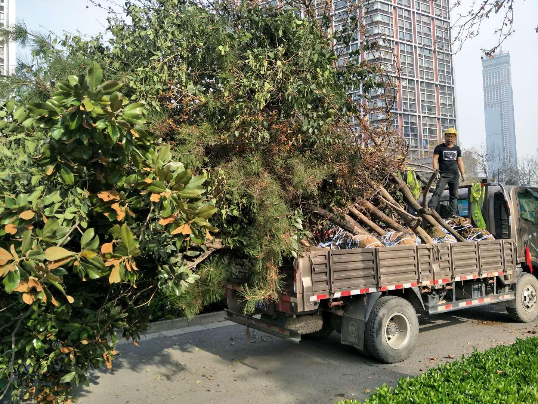 陝西苗木供應優惠