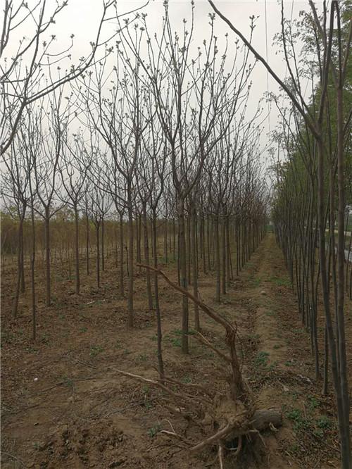 陝西園林景觀設計