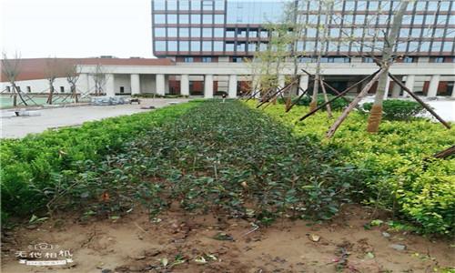 炎炎夏季,如何做好园林绿化养护