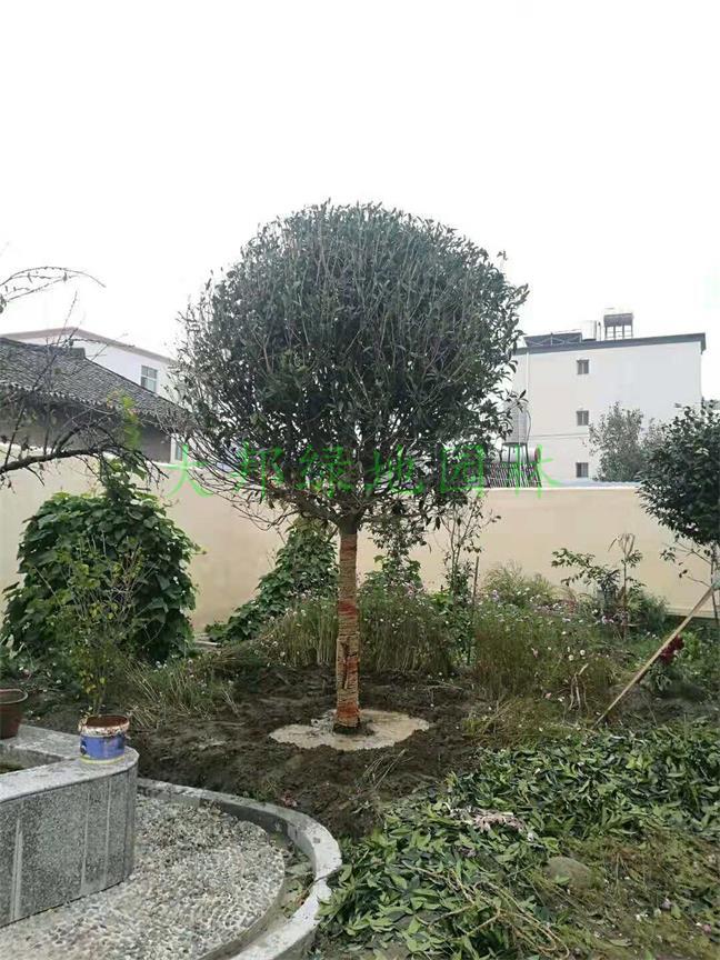 四川园林绿化工程公司