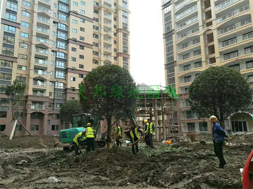 城南首座绿化工程案例