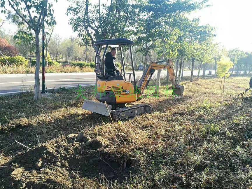 邛海濕地公司綠化工程案例