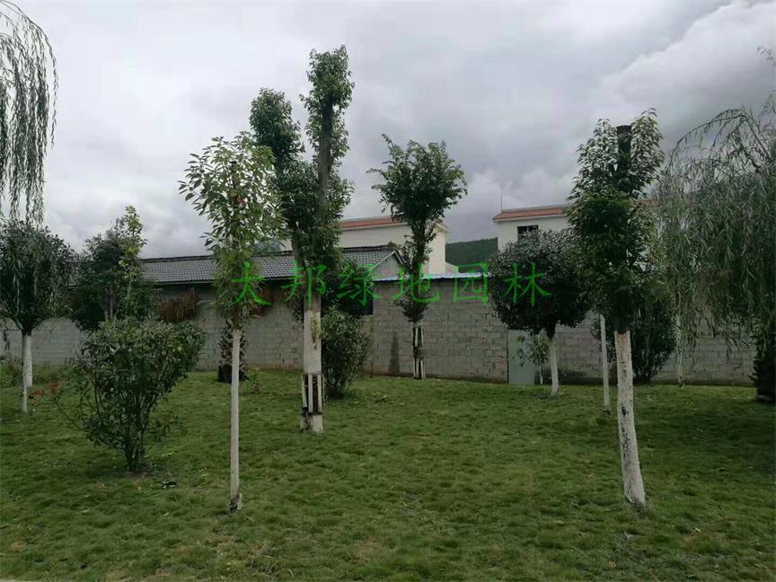 在四川绿化工程施工前也需要做好准备工作