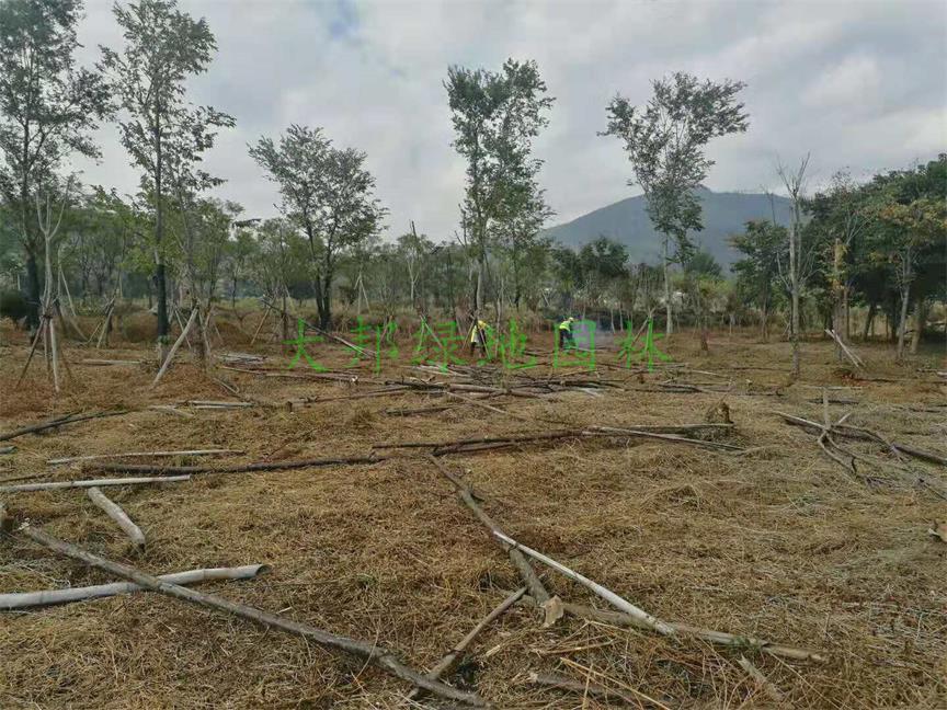 邛海湿地公司绿化工程案例