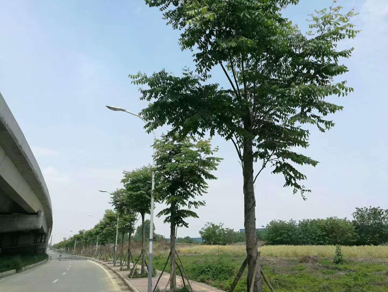 成都通站路綠化工程
