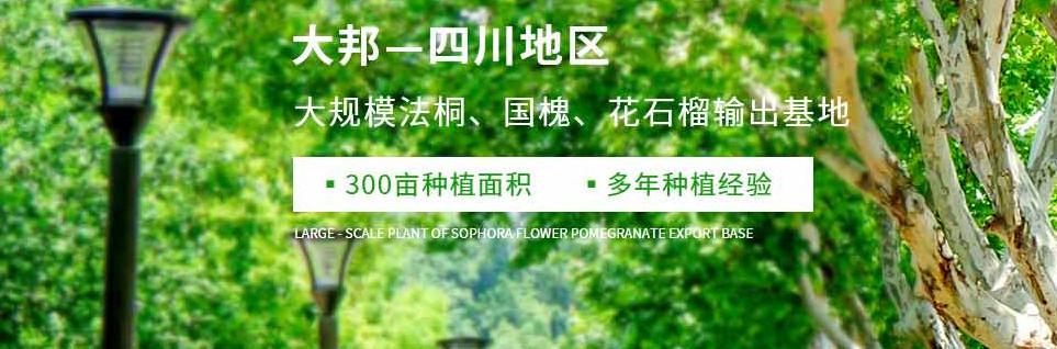 四川金葉水杉銷售