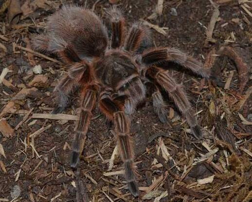蜘蛛必威体育手机端展示