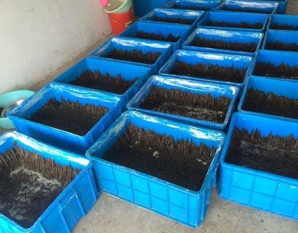 水蛭养殖现场图