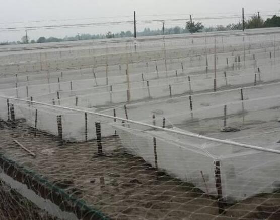 江苏水蛭养殖加盟商说