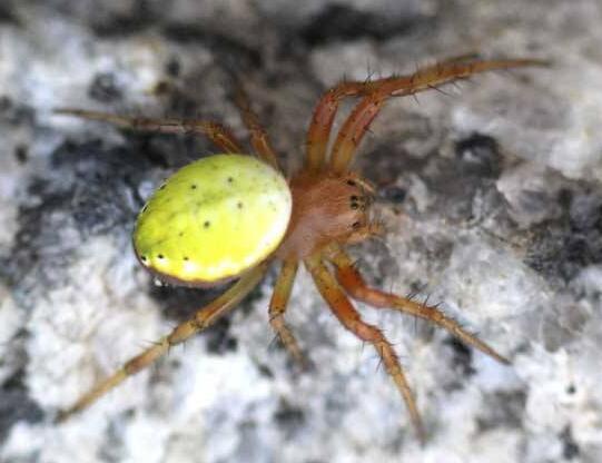 湖北蜘蛛养殖