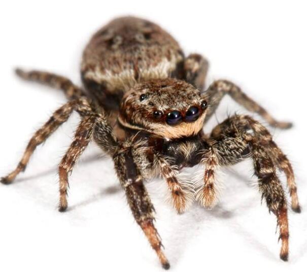 蜘蛛必威体育手机端