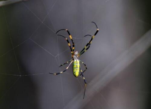 蜘蛛必威体育手机端的价值意义