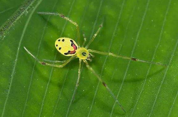 蜘蛛�B殖