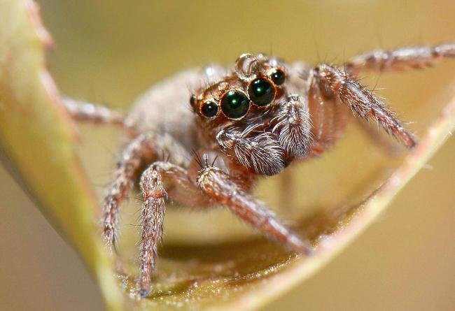 四种饲养容器,适合不同种类的单体蜘蛛养殖!