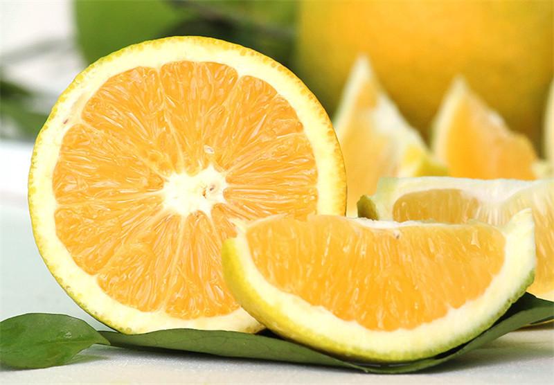 宜昌脐橙采收方法