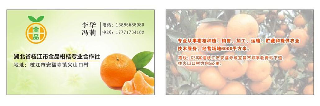 湖北宜昌金品柑橘专业合作社