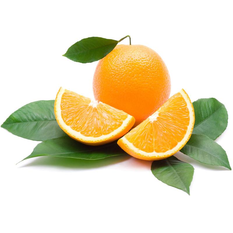 脐橙批发厂家