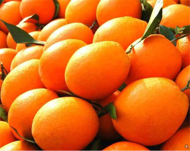 宜昌脐橙一件代发