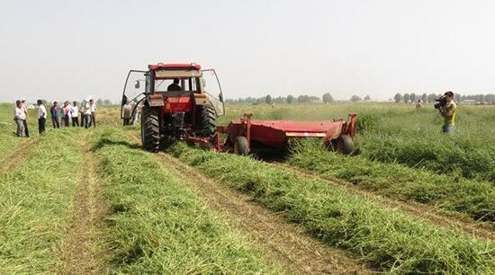 农牧业产业化经营 呼和浩特市农牧局供图
