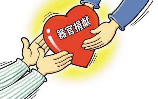 全国器官捐献登记志愿者逾135万
