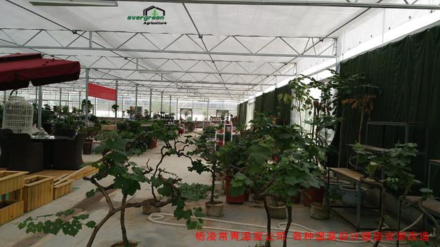 陕西温室花卉展厅