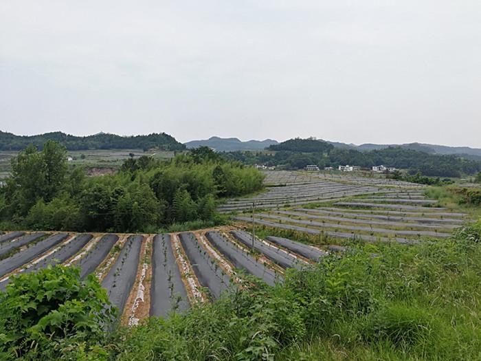 陕西园林节水灌溉技术专业,服务到位