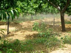 高效节水-果园节水灌溉工程
